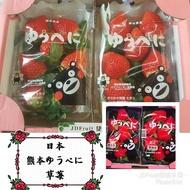 日本空運限定-挑戰最低價熊本草莓一盒兩包600g+-10%【大份量免運費】