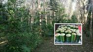 ลดราคาถูกพิเศษ เมล็ดพันธุ์ไผ่ซางหม่น Dendrocalamus sericeus ไผ่นวลราชินี ไผ่ ไม้ไผ่ Bamboo พืชตระกูลหญ้า หญ้ายักษ์ พืชเศรษฐกิจ สายพันธุ์ไผ่ เครื่องจักรสาน ตกแต่งสวน ต้นไม้มงคล เสริมมงคล 50 เมล็ด