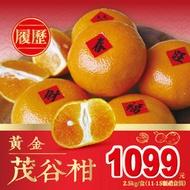 【免運】黃金履歷茂谷柑禮盒