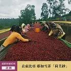 哈亞咖啡【超群杯感系列】衣索比亞 耶加雪菲 「荷芙紗」水洗咖啡豆 200g