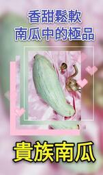 【紅樹林】 貴族南瓜~南瓜中的極品, 甜香鬆軟 (種子)~每份100粒