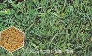 千葉園藝有限公司...草種子...韓國草種子(500公克)/歐美進口(非東南亞)