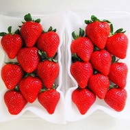 日本熊本草莓  歲末年終、年節尾牙、送禮首選、三節禮品、辦公室團購首選