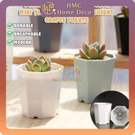 OCTAGON DESIGN WHITE COLOR MINI PLASTIC POT FOR SUCCULENT CACTUS PLANT HOME & GARDEN DECORATION PASU PLASTIK SEGI LAPAN