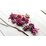 多肉植物  紫米飯(小松葉牡丹) 多肉 仙人掌《人森》迷你紫紅色多肉  會開花 1份6芽(無根)