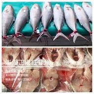 【澎湖翡翠蝦餅】澎湖正港紅甘魚 4公斤