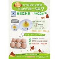 循環經濟養殖  黑水虻雞蛋