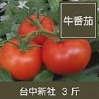 台中新社【牛番茄】3斤