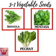 3-1 Vegetable Seeds Pechay Arugula Mustasa Seeds