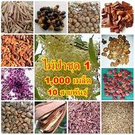 แจกฟรี ! 1,000 เมล็ด 10 สายพันธุ์ เพียงจ่ายเพิ่มค่าขนส่งและค่าดำเนินการสำหรับ ไม้ป่า ชิงชัน ซางหม่น มะฮอกกานี ไผ่รวก ประดู่ กระพี้จั่น สัก มะค่าโมง ยางนา พะยอม