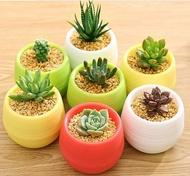 S-Garden กระถางต้นไม้พลาสติกขนาดเล็ก 7*7cm มีหลายสี สลับสีกันได้ สำหรับต้นไม้มงคล ต้นไม้นำโชค ต้นไม้อวบน้ำ Cactus จัดส่งจากในประเทศไทย