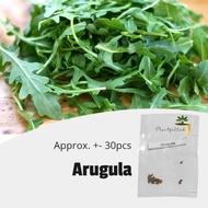 [Plantfilled] Arugula Rocket Seeds Herb  Vegetables - Approx. 30 Seeds