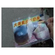 水果苗 ** 大果紫皮牛奶果-皮可以食用 ** 4吋盆/高40-50cm/ 很珍貴的水果【花花世界玫瑰園】R