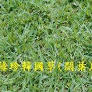 四季園 綠珍韓國草 草種子 每包100公克裝