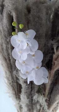Bunga Satuan Artificial Anggrek Bulan Latex Putih B076 Putih Jakarta Barat