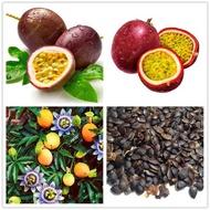 เมล็ด คุณภาพดี ราคาถูก ของแท้ 100% บอนสี เมล็ดพันธุ์ 50 เมล็ด Passion Fruit Seeds เมล็ดบอนสี บอนสีหายาก เมล็ดพันธุ์ผัก พันธุ์ไม้ผล ต้นไม้มงคล ต้นไม้ประดับ พันธุ์ดอกไม้ ต้นไม้จิ๋วจริง ต้นบอนสีแปลกๆ ต้นไม้ประดับ บอนสี บอนสีชายชล บอนสีหายาก