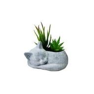 ต้นไม้ประดิษฐ์ ไม้อวบน้ำในกระถางรูปแมว