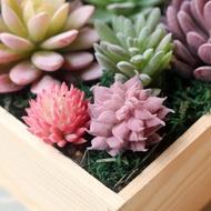 HENRI ตกแต่งบ้านสำนักงาน Miniature DIY ต้นไม้ปลอมไม้อวบน้ำประดิษฐ์พลาสติกแคคตัส