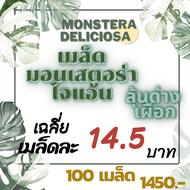 ลุ้นด่าง-เผือก เมล็ดมอนสเตอร่าไจแอนท์(Monstera Deliciosa) คัดพิเศษ นำเข้า เมล็ดมอนสเตอราไจแอนท์ จำนวนมาก
