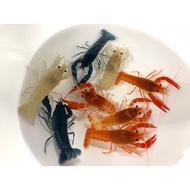 紅螯蝦 白螯蝦 藍螯蝦 幽靈螯蝦 橘幽靈螯蝦 龍紋螯蝦 特薩奴侏儒螯蝦
