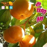 【夢饗家】一粒難求★梨山日本2A+甜柿★梨山果園現採直送-8粒/箱