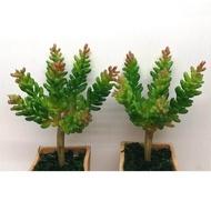 ไม้อวบน้ำปลอม ซีดัม (Succulent Sedum) สีเขียวยอดแดง ต้นไม้ ตกแต่งบ้าน ตกแต่งสวน จัดแจกัน กระถาง จัดสวน สวนขวด เกาะกิ่งไม้ จำนวน 2 ชิ้น (ไม่รวมกระถาง)