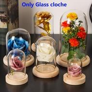 Jar Plants Transparent Bottle Terrarium Glass Vase Glass cloche
