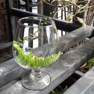 酒杯 玻璃缸 花器 魚缸 拍照佈置