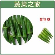 【蔬菜之家】G10.黃秋葵種子(品種:翠香)(共有2種包裝可選)