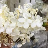 [晴冬小舖] 進口不凋花材-日本大地農園不凋金字塔繡球花 白色 (乾燥花 不凋花 花圈、花束)3P2702