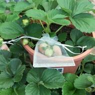 水果無花果套袋雪紗袋婚禮小物袋