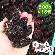 【老農手摘】天然野生桑葚果-產地直銷(500公克x15包)