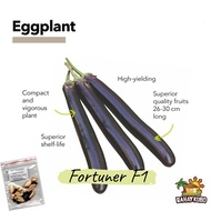 Eggplant Long Purple | Fortuner F1