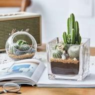 succulent plant seeds plant seeds succulent pot succulent planter succulent soil ♗Cactus creative DIY succulent potted i