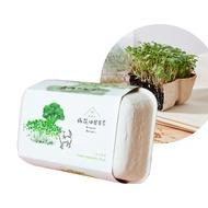 【青菜笠】雞蛋環保植栽盒(多款任選)  芝麻菜 貓薄荷 玉米筍 空心菜 芝麻葉 貓貓草 香菜《泡泡生活》