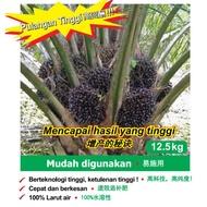 baja sawit buah Sawitron fertilizer baja sawit meningkat hasil dan pembesaran buah kelapa sawit 油棕肥