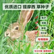 新品/種子進口提摩西草種子 貓尾草梯牧草 兔子豚鼠荷蘭豬牧草寵物口糧