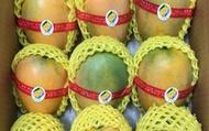 【極品預購! 芒果界的LV--夏雪芒果 8.3斤裝(A級)】外表金黃討喜 果肉濡軟香甜又細緻
