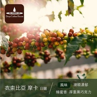 衣索比亞  摩卡 日曬 Ethiopia Mocha  咖啡豆半磅 濾掛包 │ 滴咖啡 │