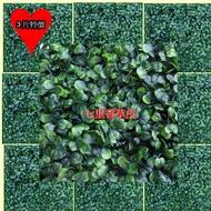 【園藝世界】七里香草皮3入