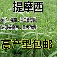 提摩西草種子提草梯牧草提木西草植物籽養兔牧草種子寵物口糧
