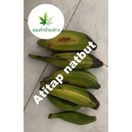 (Promotion+++) เมล็ดกล้วยตานีด่าง เมล็ดกล้วยด่าง ราคาถูก ต้นไม้ ฟอก อากาศ ต้นไม้ ปลูก ใน บ้าน ต้น บอน ไซ ต้นไม้ ปลูก ใน ห้อง นอน