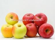 買六送六共十二顆  免運費【日本青森縣產最高等級】蜜名月蘋果&蜜富士蘋果綜合蘋果稀有組合