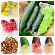 มะนาวคาเวียร์ มะนาวนิ้วมือ Finger Lime Citrus australasica Rutaceae