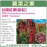 【00H49】大包裝.台灣紅藜(彩虹)種子80克(約6萬顆)