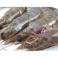 生凍白蝦(60/70) 1kg/盒-【鼎鮮市集】鱈魚,鮭魚,鯖魚,鱈場蟹腳,透抽,干貝,龍蝦,牛排,草蝦
