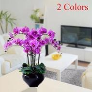 Fashion Flower Home & Living Decoration Home Living Orchids DIY Home & Kitchen Plants Moth Orchid De