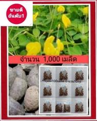 เมล็ดพันธุ์ถั่วบราซิล  บรรจุ1000เมล็ด  ถั่วบราซิล  ไม้ประดับ จัดสวน  พืชคลุมดิน สนามหญ้า  (ถั่วปิ่นโต  ถั่วเปรู ถั่วพินตอย ถั่วอมาริลโล arachis pintoi)