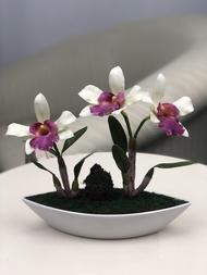 ดอกไม้แต่งบ้าน ดอกกล้วยไม้แคทลียา จัดในกระถางสีขาว สำหรับประดับตกแต่ง
