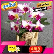 [ ลดเฉพาะวันนี้ ]บริการเก็บเงินปลายทาง ] ดอกกล้วยไม้ปลอม แคทลียาจำลอง ดอกไม้ประดิษฐ์ ดอกไม้ผ้าประดับตกแต่ง +กระถางหวาย [ Sale ราคาพิเศษ!! ]